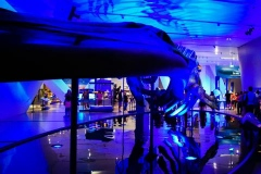 Out of the Depths - The Blue Whale Story 1, ROM Toronto